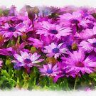 Osteospermum - watercolour by PhotosByHealy