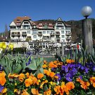 natures view..Thun city.... by fladelita