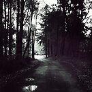 Country Lane by Jon Staniland