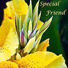 To My Special Friend by heatherfriedman
