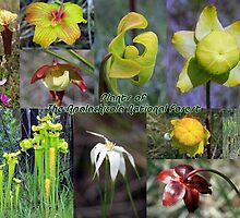 Plants of The Apalachicola National Forest by RebeccaBlackman