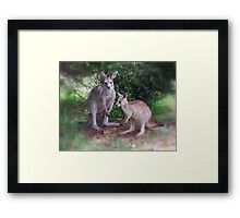 Kangaroos at Buchan Framed Print