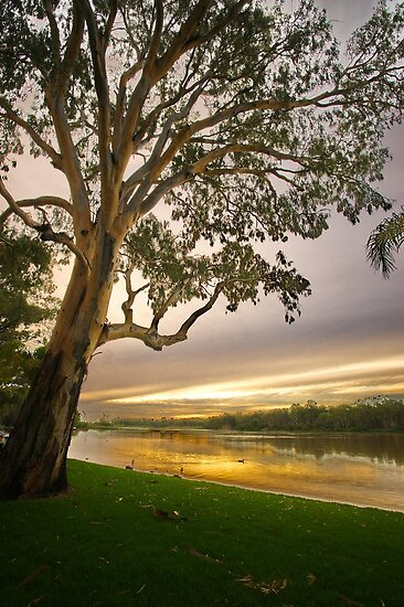 Murray riverbank at Renmark, South Australia by PC1134