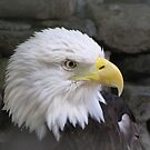 Eagle by Misty Lackey