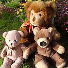 Teddys sitting in the sun by Heidi Mooney-Hill