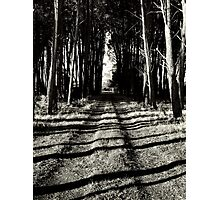 The road less travelled.... Photographic Print