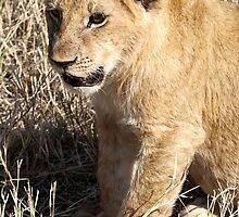 Lion Cub Sitting, Maasai Mara, Kenya  by Carole-Anne