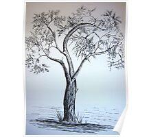 Budding Oak Tree Poster