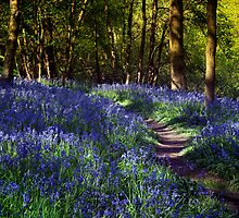 Bluebell Woods by Ann Garrett