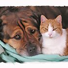 Cat and Dog  by sharitw