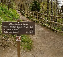 Newfound Gap Start to the Appalachian Trail by Robert H Carney