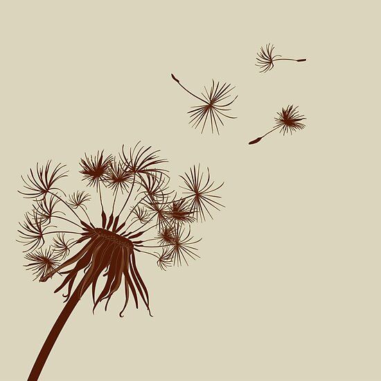 how to draw a dandelion seed