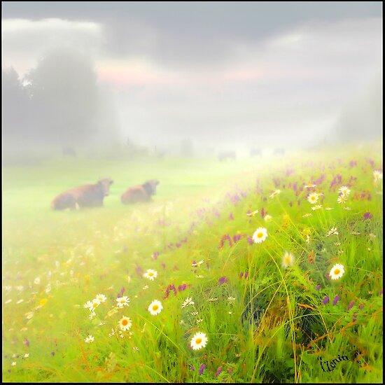 Meadow's Mist