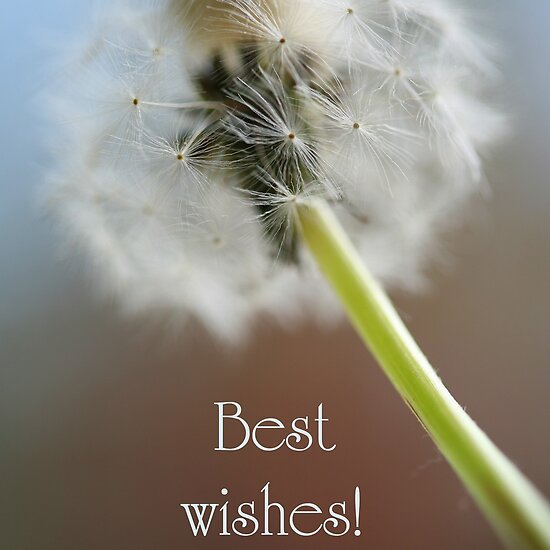 A best wishes card featuring a colour photograph of a Dandelion.