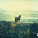 Polaroid: Wild Black Horse by MoiMM