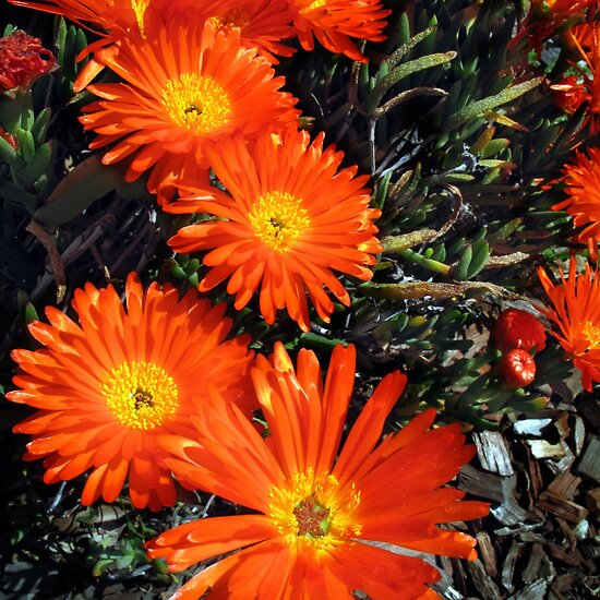 orange flowers bouquet. drawing orange flowers in