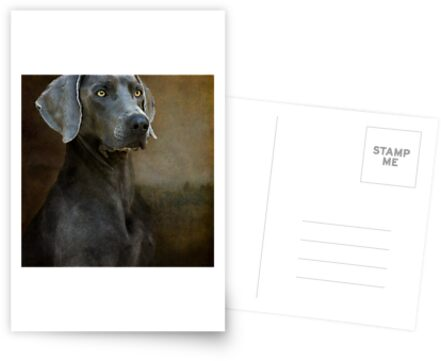 com/people/leslienicole/works/3906585-blue-weimaraner-newborn ...