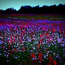 Blue and Red Wild flowers by Patricia Cleveland