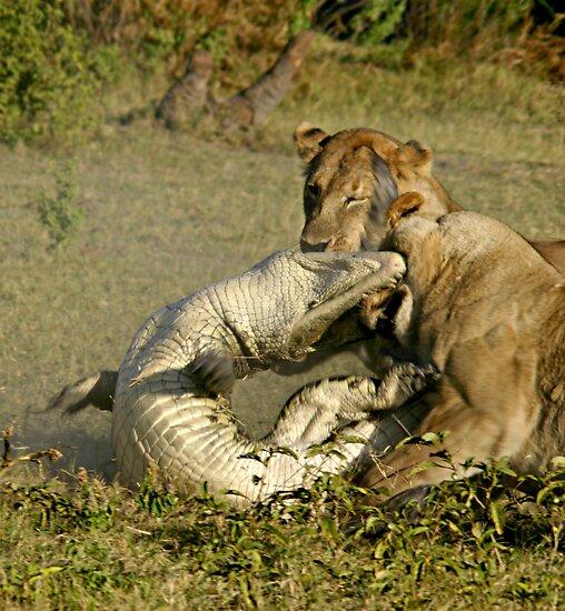 Elephant Kills Crocodile Lion Lion Kills Crocodile