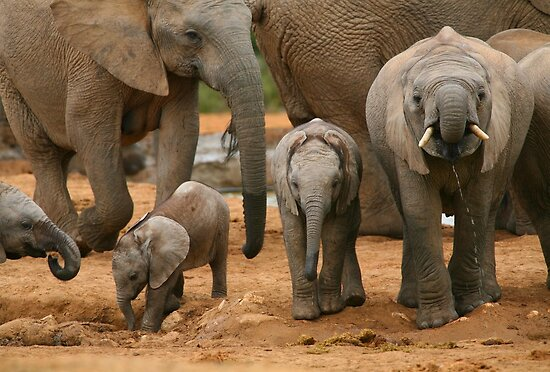 african elephant art. Baby African Elephants by