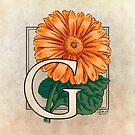 G is for Gerbera