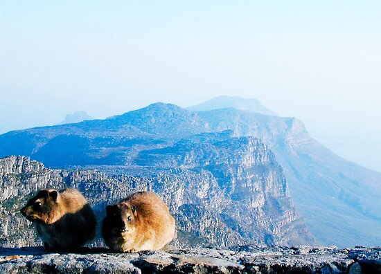 Table Mountain Friends - Cape Town, South Africa