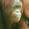 'Honolulu Zoo: Kristy' featured in Zoofari
