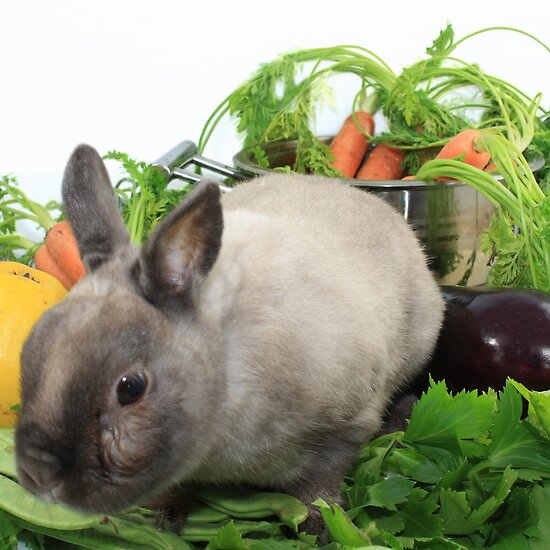http://ih3.redbubble.net/work.6964454.1.flat,550x550,075,f.rabbit-with-vegetables.jpg