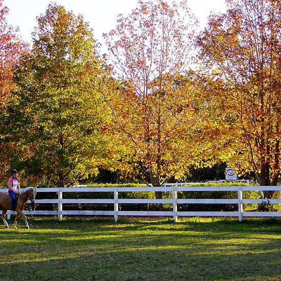 horse pictures to colour for kids. horse and autumn colour