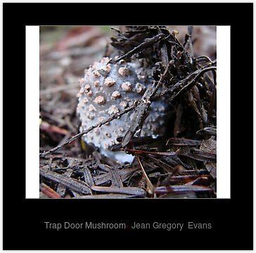 Trap Door Mushroom