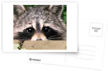 Buy Postcards and Greeting Cards