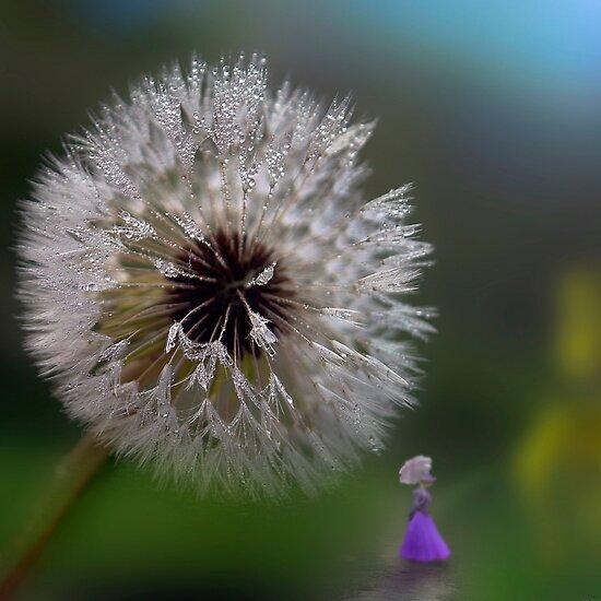Moist Dandelion