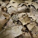 Camouflage - Toad among oak leaves by Edward Fielding