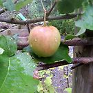 Welsh Apple by lyvit