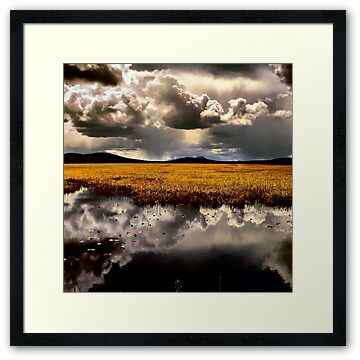 Klamath Marsh in the early Spring as a huge storm moves in over the lake.  Picture taken by Patricia Harkins