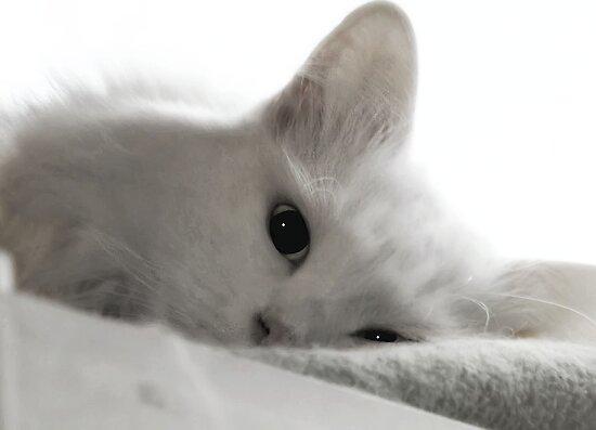 Sad Cat Face Cat With Sad Face Sad Cat Face
