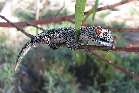 http://ih3.redbubble.net/work.901717.2.flat,550x550,075,f.golden-tailed-gecko-strophurus-taenicauda.jpg