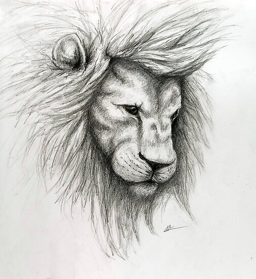 """""""Lion Pencil Sketch"""" by Molly Lombard 