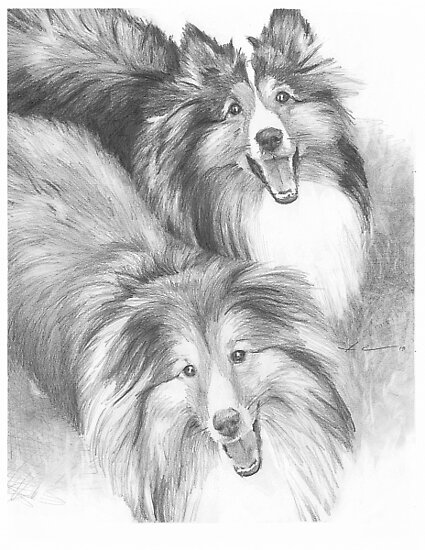 """""""Sheltie dogs drawing"""" by Mike Theuer 