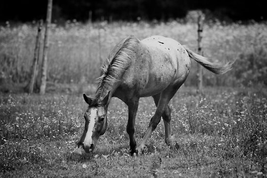 """Appaloosa Horse Black and White"" by jamieleigh 