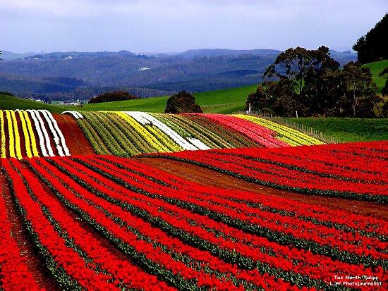 أجمل حدائق الورود,حدائق من الورود,مدينة الورد,دنيا الأزهار,عالم الورود,زهور بكل الألوا flat,550x550,075,f.j