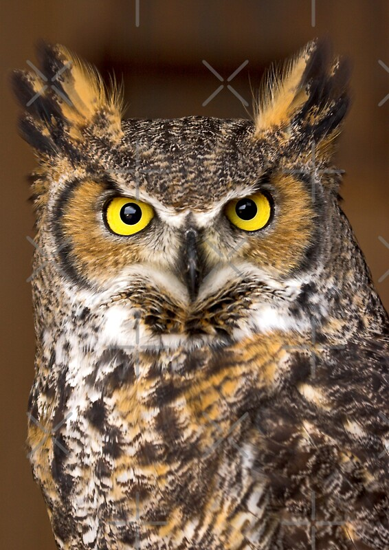 Quot Canadian Horned Owl Quot By Dave Knowles Redbubble