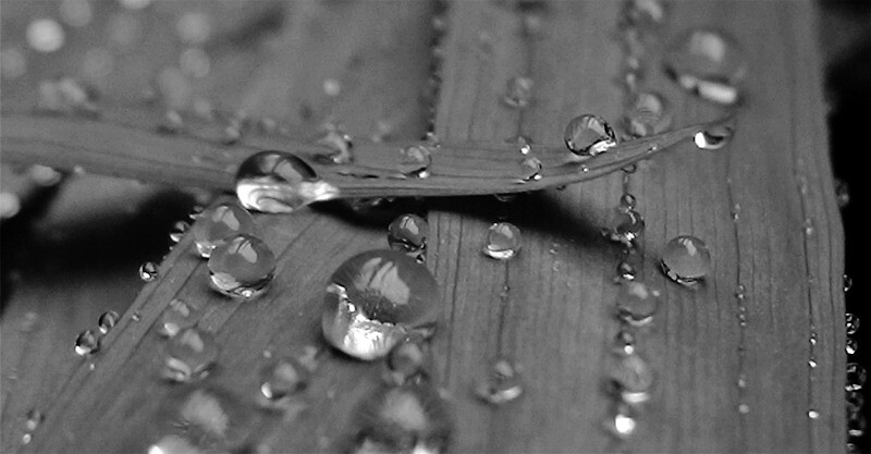 10 Rain Photography Tips to Take Advantage of April Showers |Rain Photography Black And White