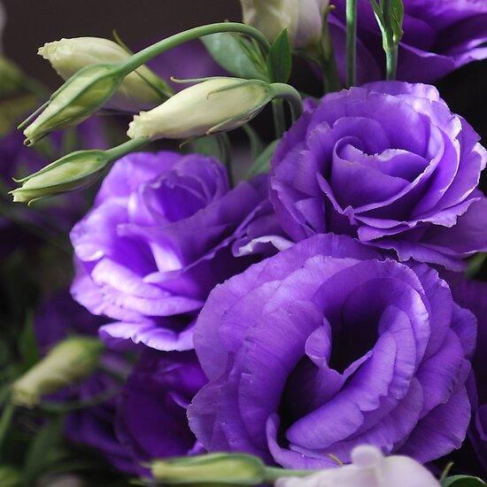 Names Of Purple Flowers For Wedding: Dark Purple Flowers? Pics And Names? - Wedding Forum